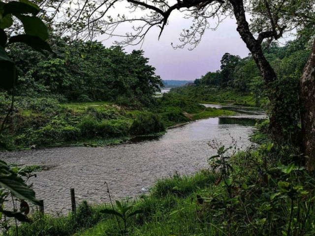 View over the river in the jungle