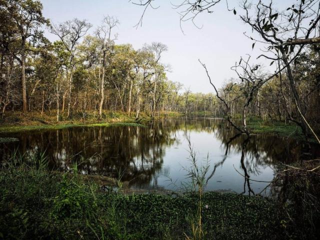 Jungle vegetation and lake