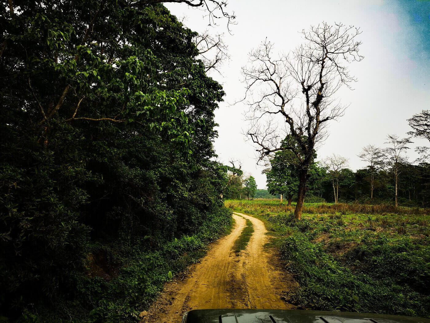 Road in jungle