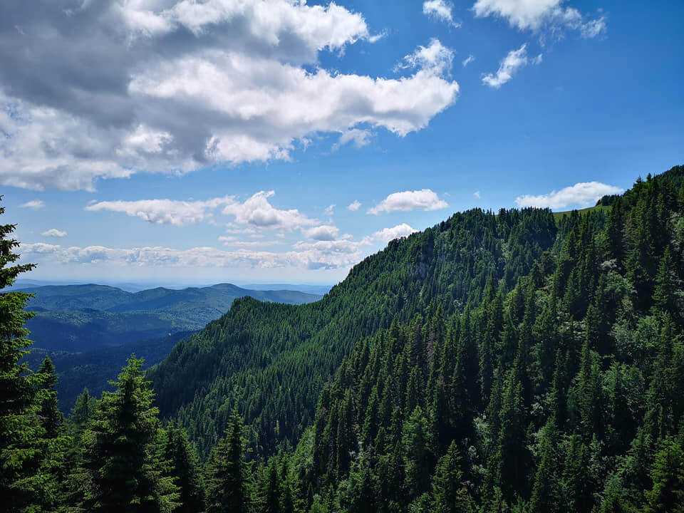 View over forests in Bucegi National Park