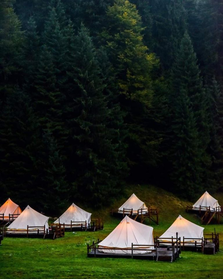 Glamping tents in front of the forest