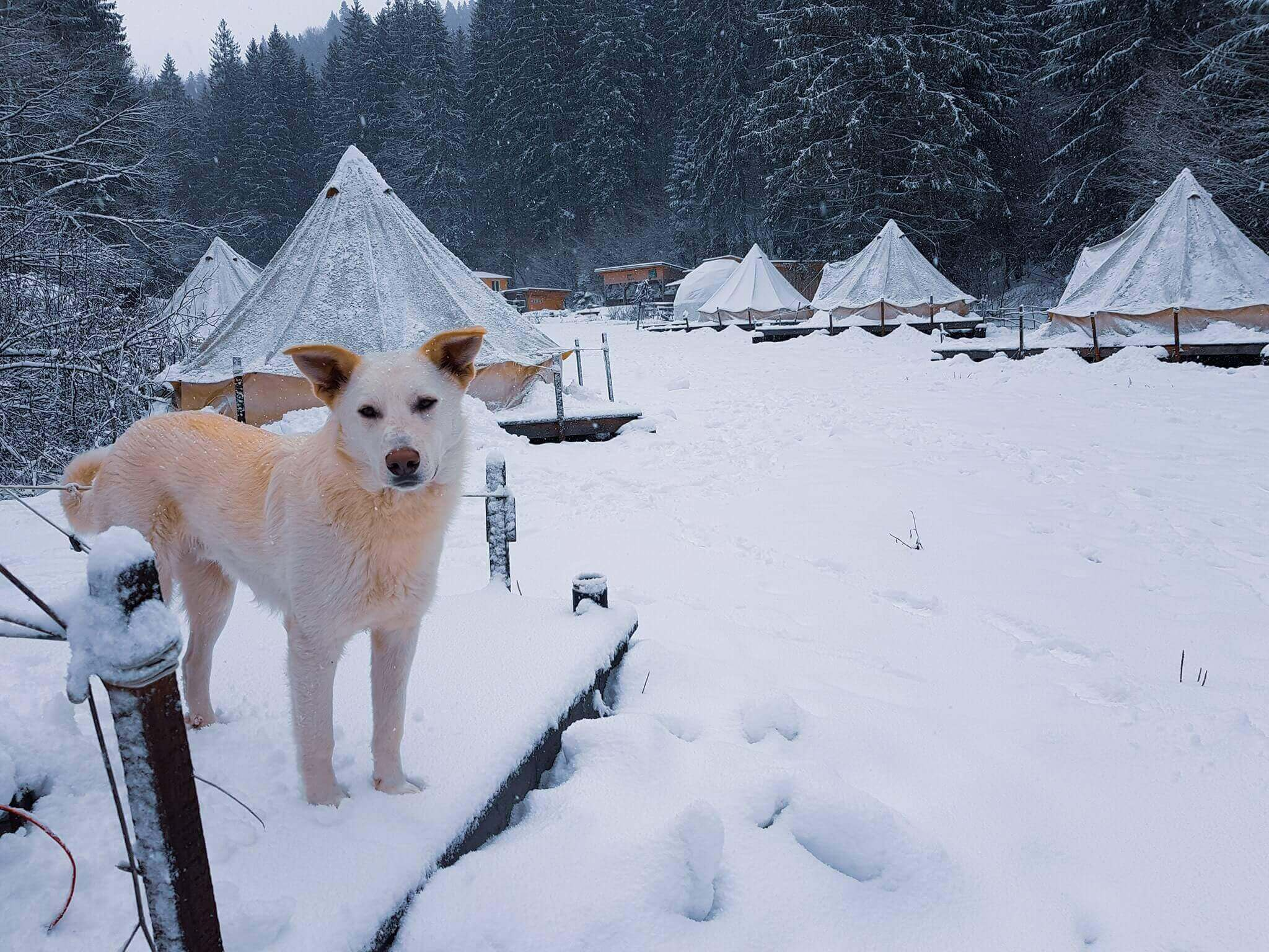 Dog in front of Fain Glamping Resort in wintertime