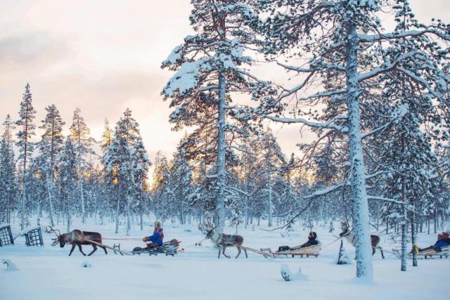 Reindeer Safari at Kakslauttanen Arctic Resort, Lapland, Finland