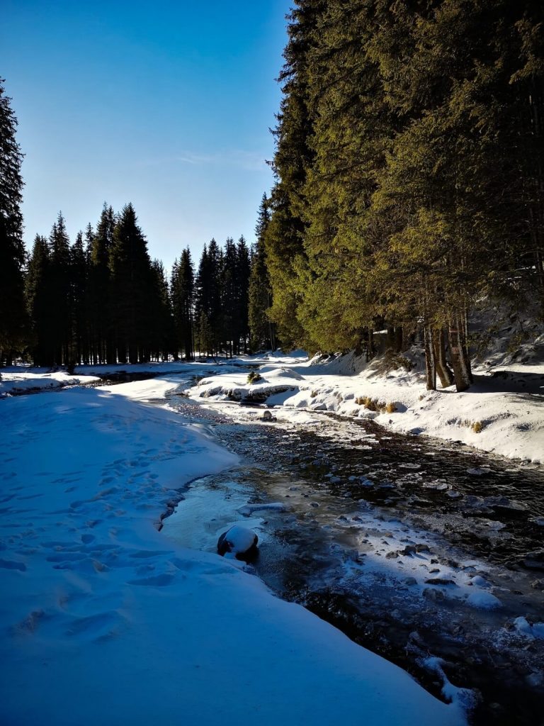 mountain river on a winter day