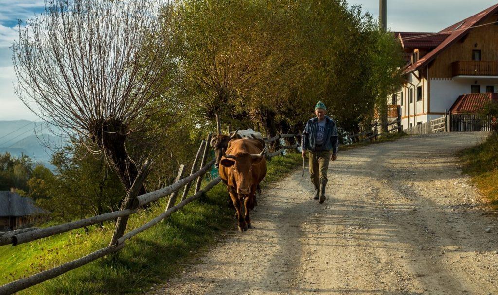 Romanian farmer on the country road in Magura village Romania
